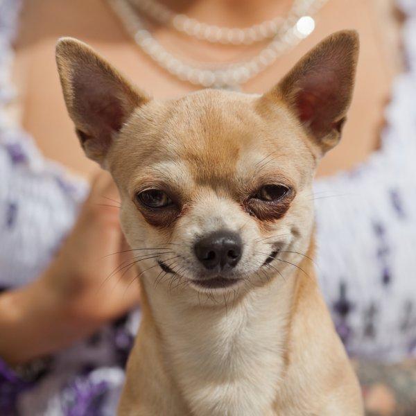 Estudio nos cuenta la firme sobre si los animalitos se ríen o no