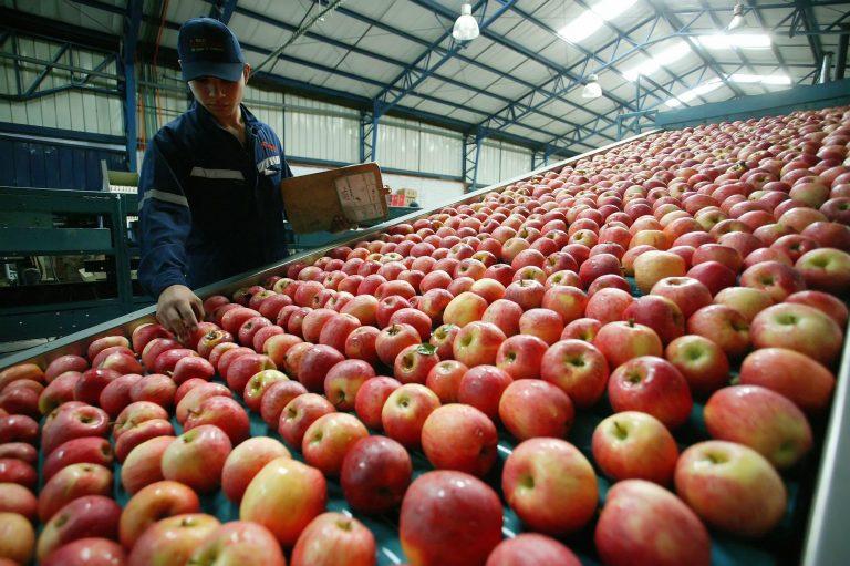 Exportadores chilenos de fruta se defienden por productos retirados en Estados Unidos