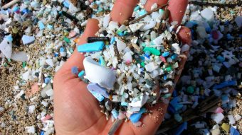 ¿Todavía crees que es cuento? Nuestro cuerpo estaría contaminado por plásticos