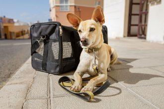 #NoSomosEquipaje: La campaña que busca darle viajes dignos a nuestras mascotas