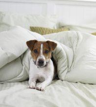 ¿Es bueno dormir con tu perro? Esta investigación lo aclara