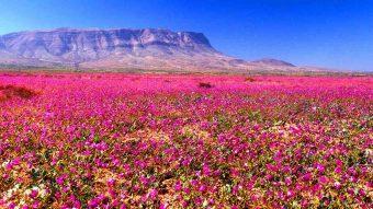 ¿A qué zona del país premiarías? Chile ganó importante premio de turismo en Sudamérica