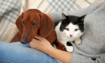 ¿Participarías?: Ya está disponible primera encuesta sobre Tenencia Responsable de Mascotas