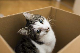 Estudio revela porque los gatitos aman las cajas de cartón