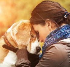 ¡Son lo mejor! Estudio revela que acariciar a un perro reduce la ansiedad y el estrés