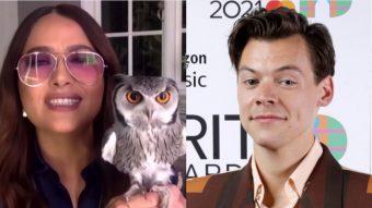 La divertida anécdota que unió a Salma Hayek, Harry Styles…¡Y un búho!