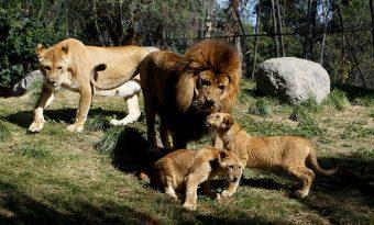 Buin Zoo lanza campaña para que apadrines a tu animal favorito