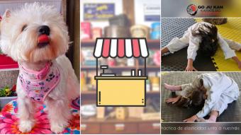 Kioskito Romántica: Clases de karate, accesorios para mascotas y más en la vitrina de miércoles