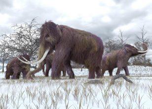 """Lanzan proyecto para """"resucitar"""" a especies extintas: Partirían con el mamut"""